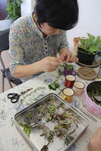 やまもと文化祭 多肉植物の寄せ植え
